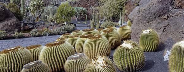 Wall Art - Photograph - Cactus Garden by Tony Craddock/science Photo Library