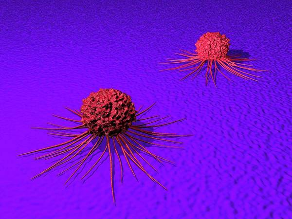 Wall Art - Photograph - Cancer Cells by Alfred Pasieka/science Photo Library