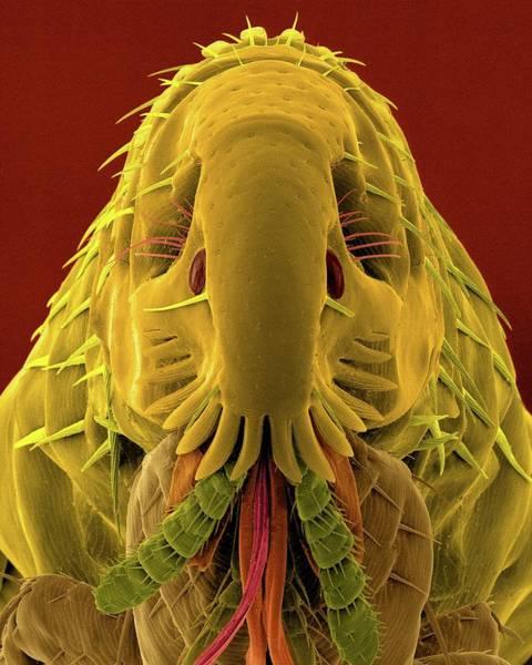 Pest Wall Art - Photograph - Cat Flea by Dennis Kunkel Microscopy/science Photo Library