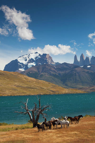 Antartica Wall Art - Photograph - Chile, Torres Del Paine National Park by Walter Bibikow