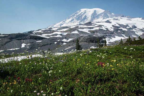 Wanderings Photograph - Close-up Of Wildflowers, Mount Rainier by Panoramic Images