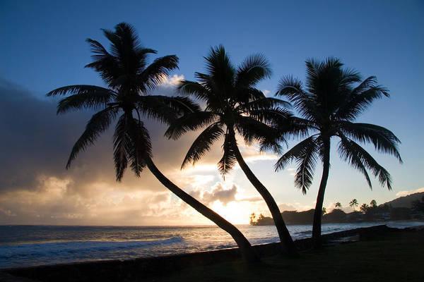 Wall Art - Photograph - Coconut Trees At Sunrise, Oahu, Hawaii by Craig K. Lorenz