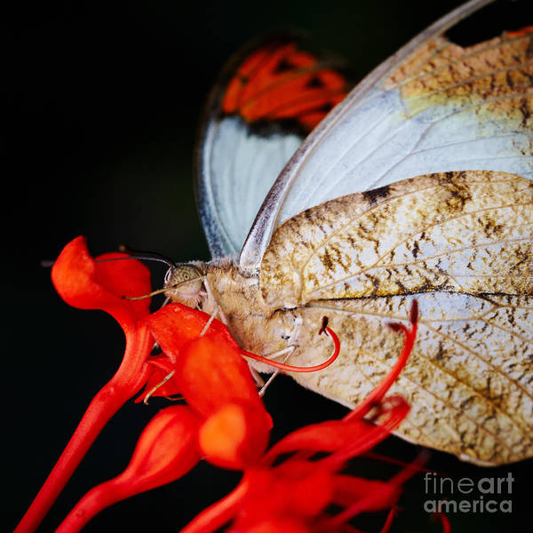 Photograph - Colorful Portrait Of A Butterfly  by Nick  Biemans