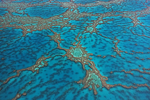 Photograph - Coral On Hardy Reef Australia by Ingo Arndt