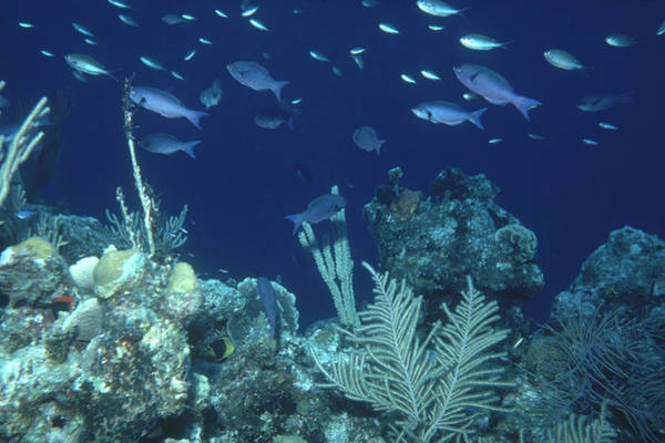 Wall Art - Photograph - Coral Reef In The Bahamas by Carleton Ray
