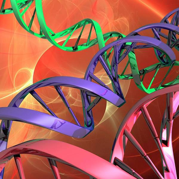 Wall Art - Photograph - Dna Molecules by Laguna Design/science Photo Library