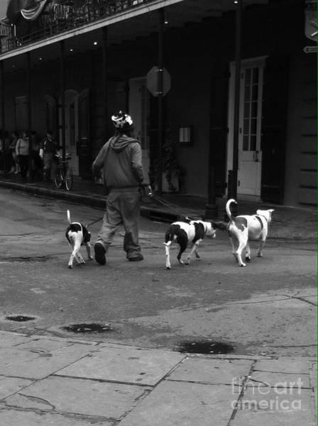 Photograph - 3 Dog Day by WaLdEmAr BoRrErO