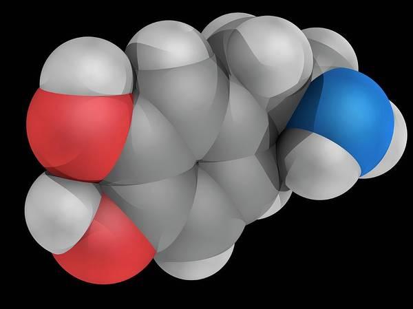 Wall Art - Photograph - Dopamine Molecule by Laguna Design/science Photo Library