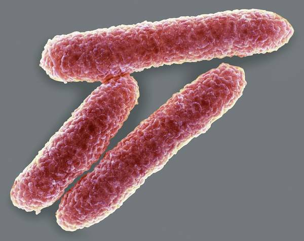 Escherichia Coli Photograph - E. Coli Bacteria by Science Photo Library