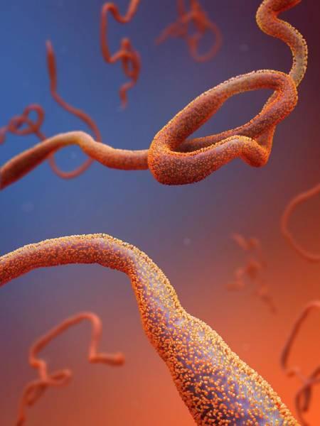 Ebola Photograph - Ebola Virus Particles by Tim Vernon