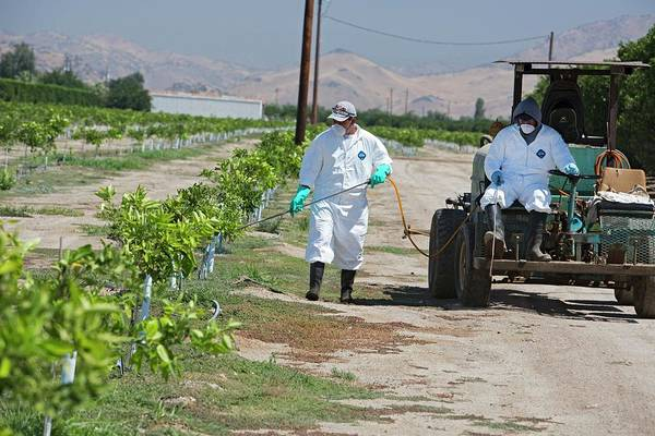 Protective Clothing Photograph - Farm Workers Applying Pesticide by Jim West