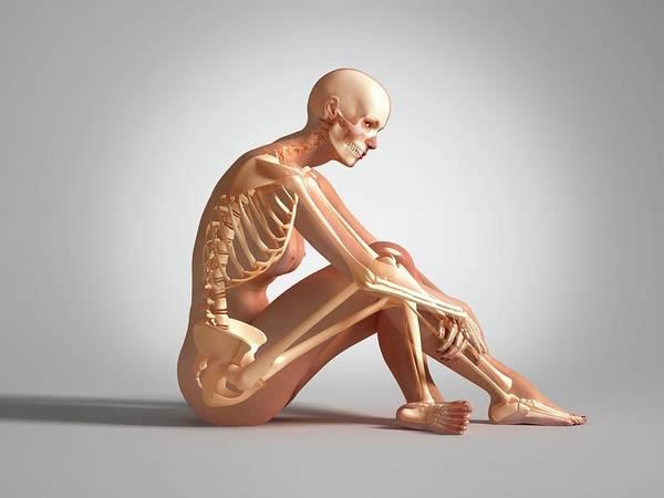 Bone Structure Wall Art - Photograph - Female Skeleton by Leonello Calvetti/science Photo Library
