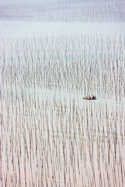 Seaweed Photograph - Fishing Boat Sailing Through Bamboo by Keren Su