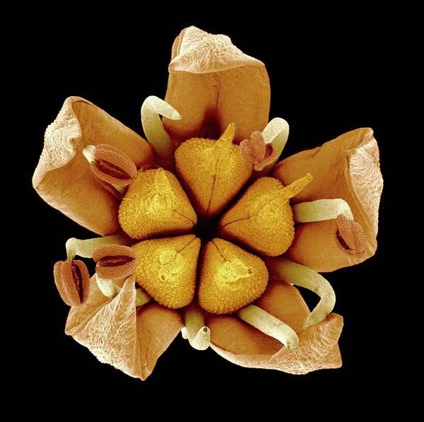 Stamen Photograph - Flower by Susumu Nishinaga