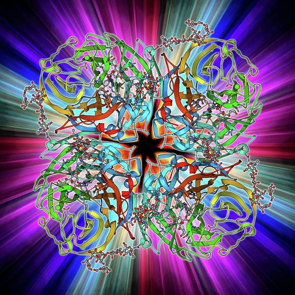 Neuraminidase Photograph - Flu Virus Surface Protein Molecule by Laguna Design
