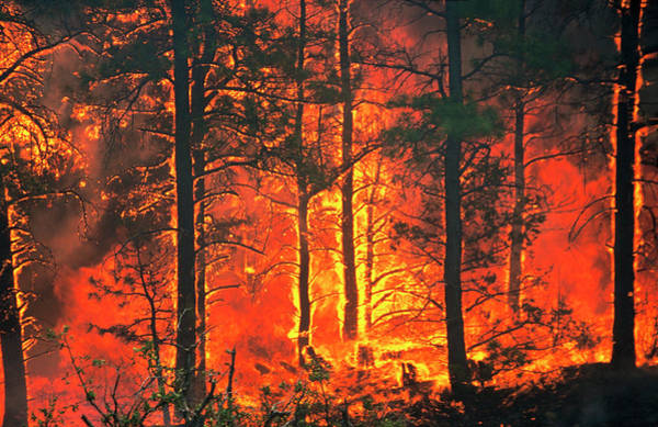 Weston Photograph - Forest Fire by Kari Greer/science Photo Library