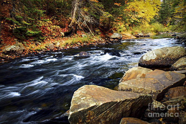 Wall Art - Photograph - Forest River In The Fall by Elena Elisseeva