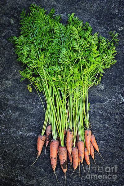 Photograph - Fresh Carrots From Garden by Elena Elisseeva