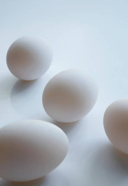 Wall Art - Photograph - Fresh Duck Eggs by Claudia Dulak / Science Photo Library