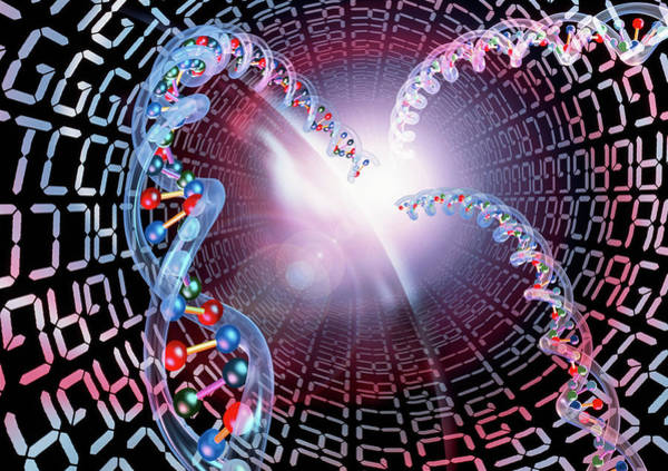 Genetic Code Photograph - Genetic Code by Alfred Pasieka/science Photo Library