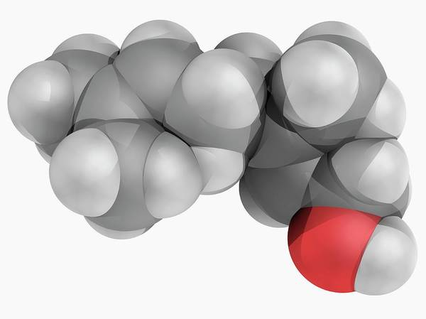 Wall Art - Photograph - Geraniol Molecule by Laguna Design/science Photo Library