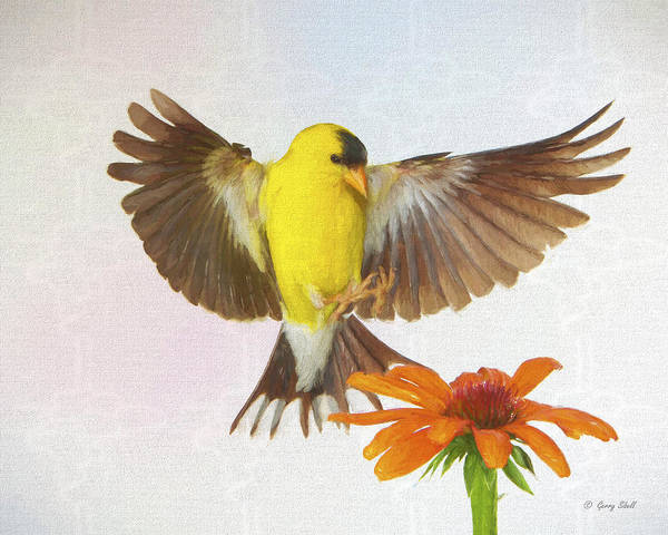Digital Art - Goldie And The Coneflower by Gerry Sibell