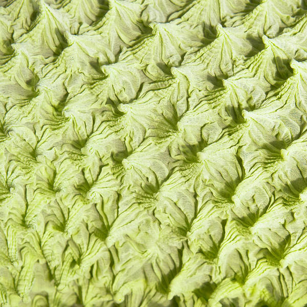Wall Art - Photograph - Green Fabric by Tom Gowanlock