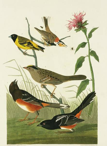 Rufous Photograph - Group Of Birds by Natural History Museum, London/science Photo Library