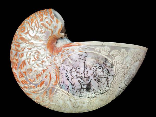 1600s Wall Art - Photograph - Hans Sloane's Nautilus Shell by Natural History Museum, London