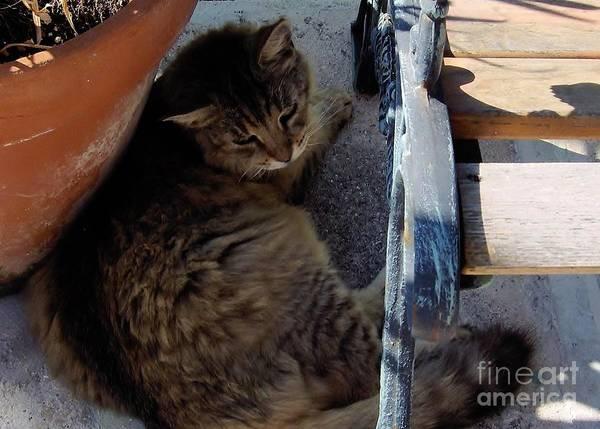 Photograph - Hemingway - Cat by D Hackett