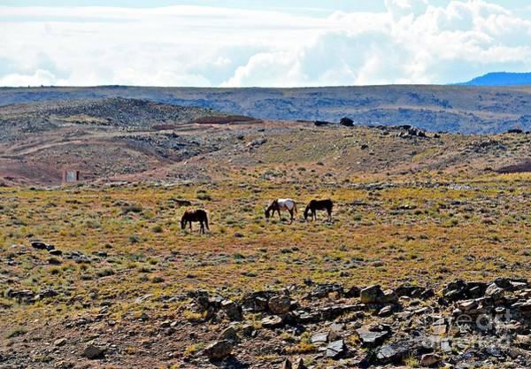 Photograph - 3 Horses At 4 Corners by Randy J Heath