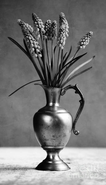 Wall Art - Photograph - Hyacinth Still Life by Nailia Schwarz