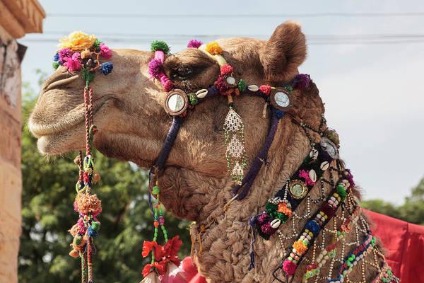 Beading Photograph - India, Rajasthan, Jaisalmer by Alida Latham