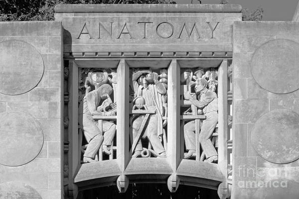 Gi Photograph - Indiana University Myers Hall Anatomy by University Icons