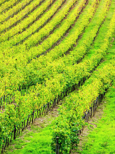 Away From It All Wall Art - Photograph - Italy, Tuscany, Autumn Vineyards by Terry Eggers