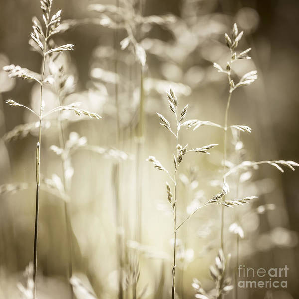 Flowering Plants Photograph - June Grass Flowering by Elena Elisseeva