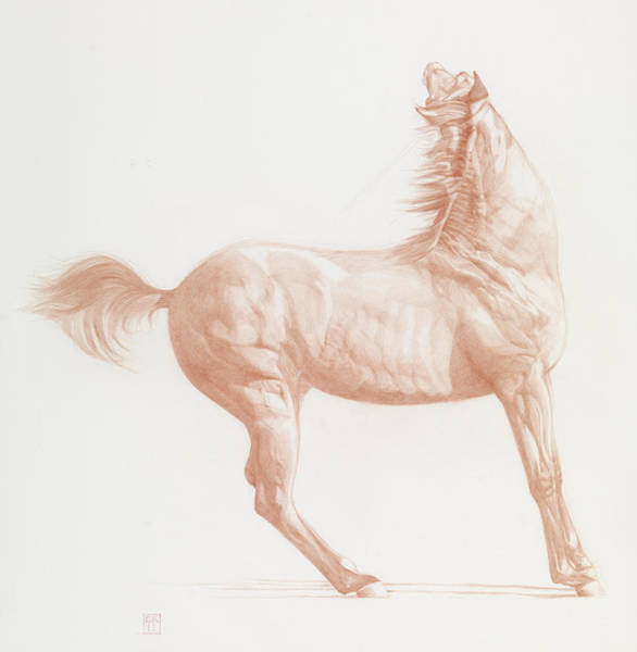 Equestrian Drawing - Kicking Off by Emma Kennaway