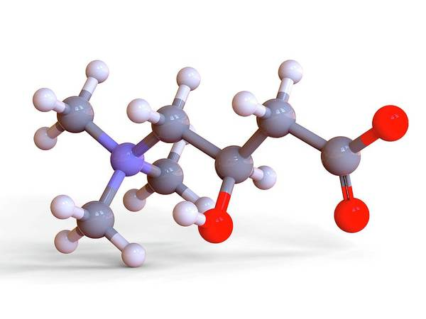 Atherosclerosis Wall Art - Photograph - L-carnitine Food Supplement Molecule by Alfred Pasieka/science Photo Library