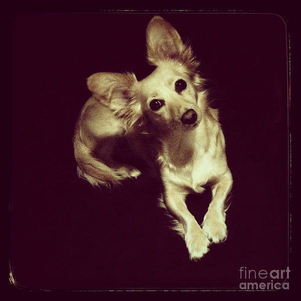 Iphoneography Wall Art - Photograph - Laika by Elena Nosyreva