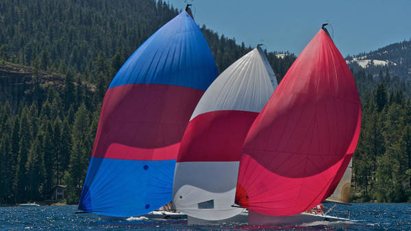 Photograph - Lake Tahoe Spinnakers by Steven Lapkin