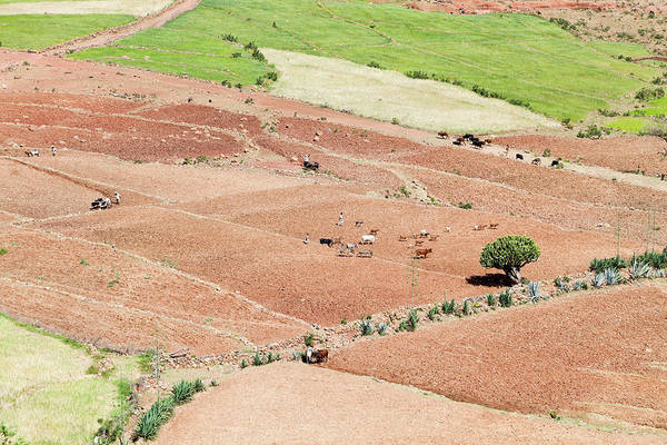 Amhara Photograph - Landscape In Tigray, Northern Ethiopia by Martin Zwick