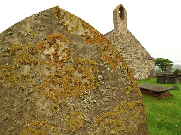 Welsh Church Photograph - Lichen On Gravestone In Unpolluted Air by Cordelia Molloy
