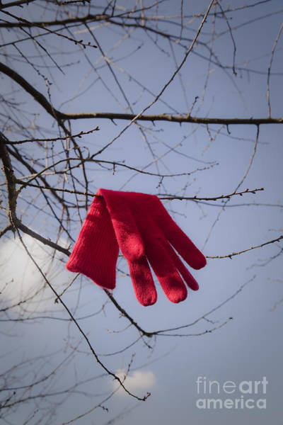 Disappearance Photograph - Lost Glove by Maria Heyens