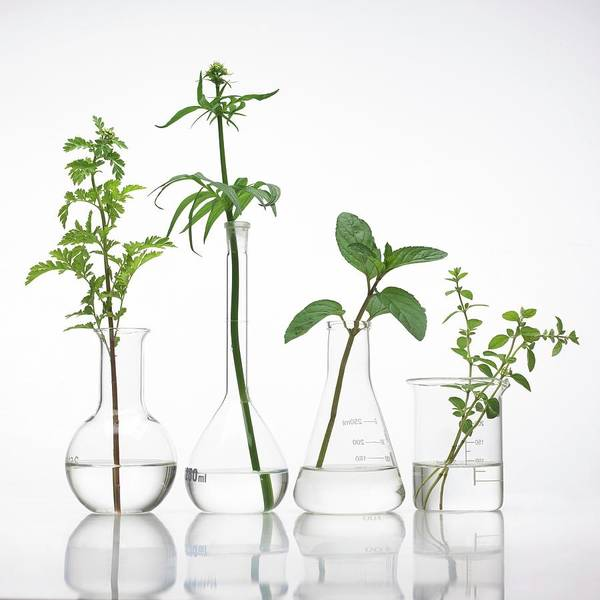 Bottle Green Photograph - Medicinal Plants by Science Photo Library