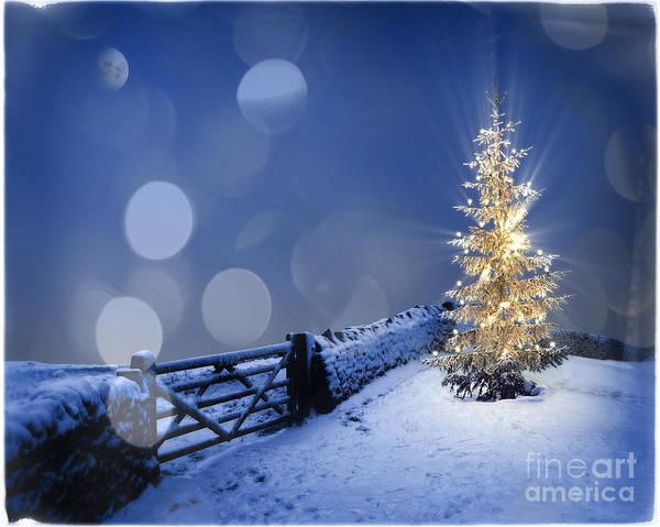 Photograph - Merry Christmas by Edmund Nagele
