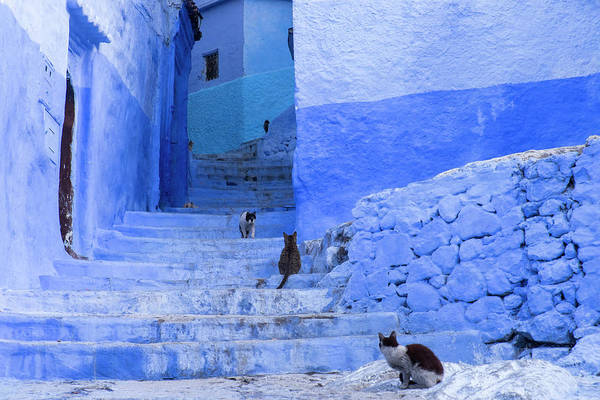 Wall Art - Photograph - Morocco, Chefchaouen by Brenda Tharp