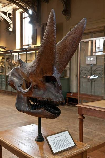 Wall Art - Photograph - Natural History Museum by Pascal Goetgheluck/science Photo Library