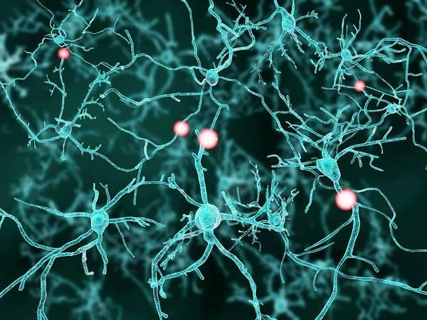 Wall Art - Photograph - Nerve Cells, Artwork by Juan Gaertner
