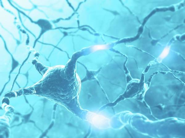 Nerve Cell Photograph - Neural Network by Ktsdesign/science Photo Library