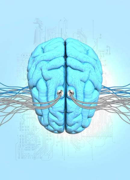 Biomedical Engineering Wall Art - Photograph - Neuromorphic Engineering by Victor Habbick Visions